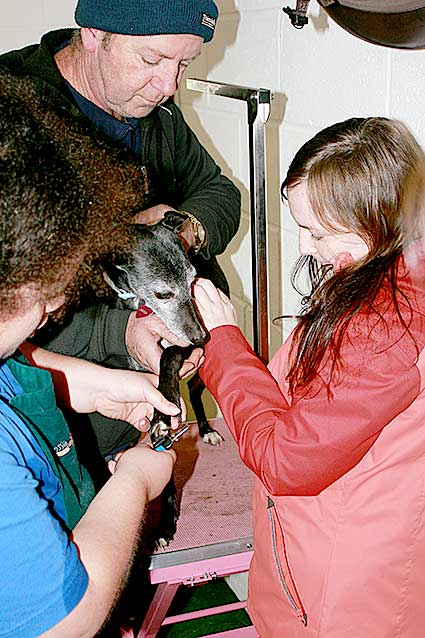 Dog grooming and walking is a popular choice